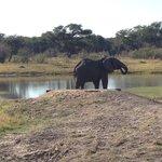 Elephants at the Hide waterhole
