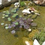 Teich mit Goldfischen