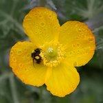 Flower in the front garden