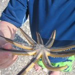 starfish  caught by this boy's father
