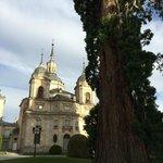 Palace & Tree