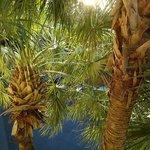 direkt vorm Fenster erheben sich wunderbare Palmen!