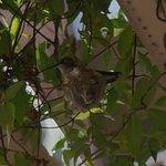 The hummingbird sharing breakfast