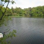 Doxford Lake and swan!
