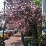 Very lovely street full of Boston atmosphere and those wonderful brownstones