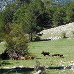 Wild pigs above Nava del Espino