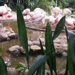 Extremely small enclosure for flamingos :(