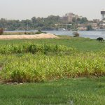 in front of Nile