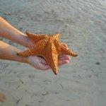 Beautiful, breathing starfish...
