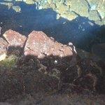 minuscule crustace a jameos del agua