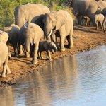 Thula Thula Elephants Herd