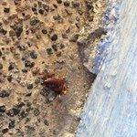 Cockroach on the walkway outside