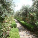 Hotelanlage / Hotelgarten -  Garden