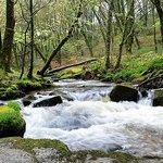 Golitha Falls St Neot. River Fowey