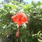 Flower in the lodge garden