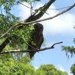 Beautiful owl at end of boardwalk