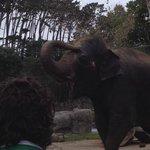 Sand-showering elephant