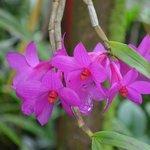 Hawaiian Botanical Garden flower