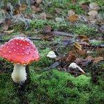 Very Cool Mushroom