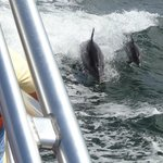 Dolphins following the boat