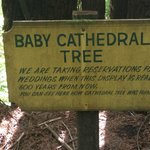 Baby Cathedral trees