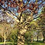 Sunnidale Park Arboretum