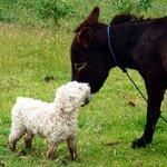 Mattheo and John The Donkey