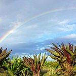 Best rainbows ever