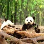 обед в panda house