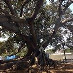 Wonderful tree.