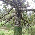 Bela árvore.