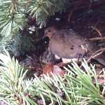 baby birds are coming soon in the tree near the reception!