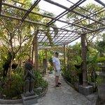 Poinciana gardens