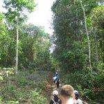 Jungle hike