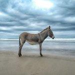 Amapondo's Donkey Lizwe