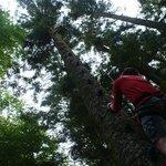 escalade arbre