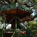 キャンプの象徴、樹上のテラス