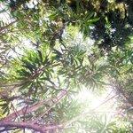Blick in die Bäume im Garten