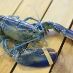 Blue Cornish Lobster weekend/30th&31st May