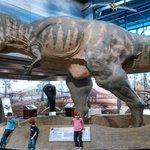 The T - Rex