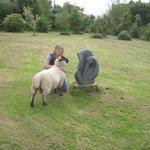 George the friendly sheep