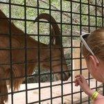 Feeding one of the animals