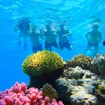 Tiran Island Snorkelling