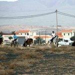 excursions/horse riding fuerteventura