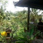 Breakfast overlooking the lush green forest.