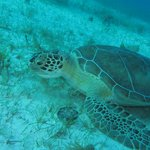 One of many turtles seen on our dive