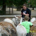 Jill feeding the deer as fast as she can!!!