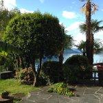 Orangenbaum im Garten