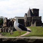 Seagull and Inchcolm Abbey