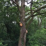 This tree is at least 100 years old!!!